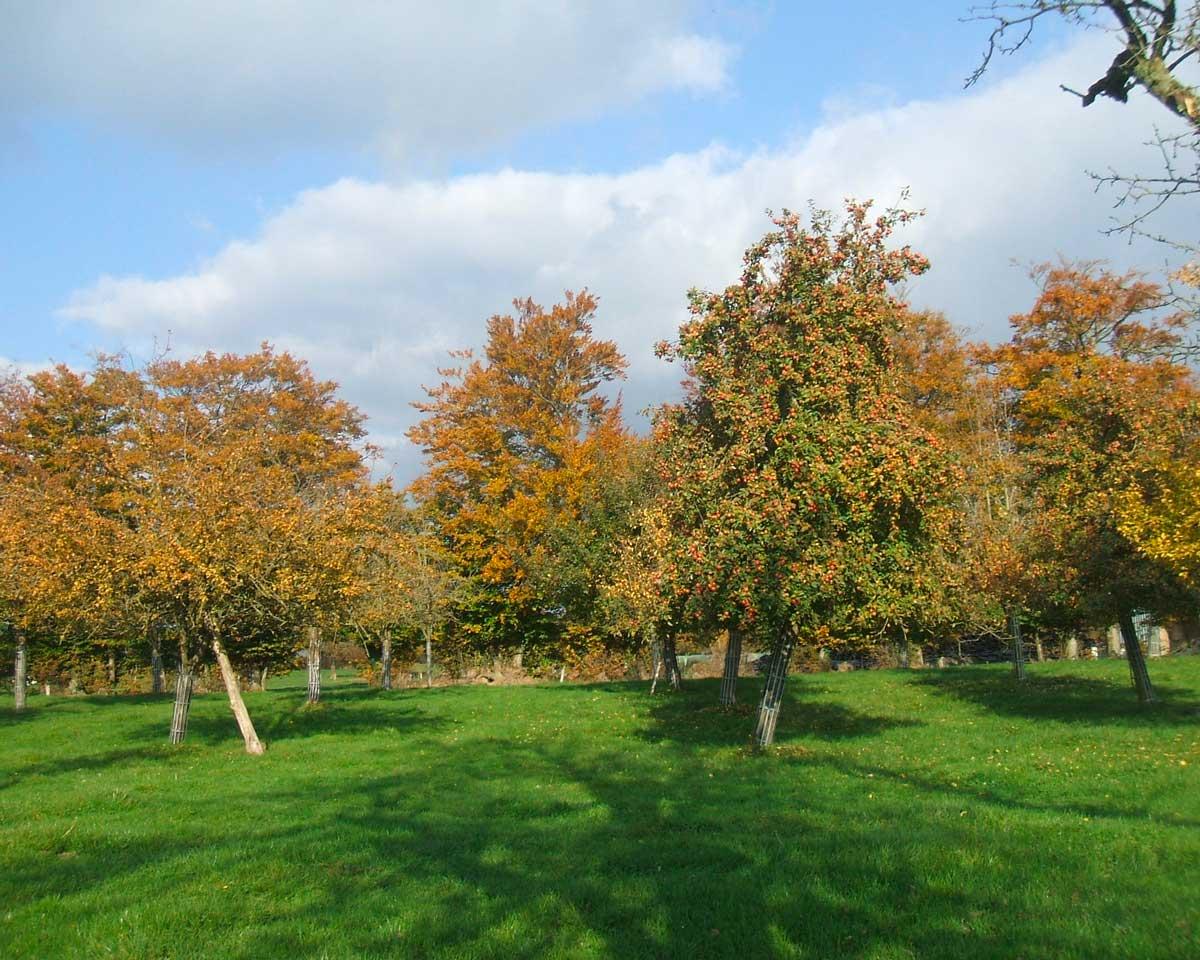 Pommiers-en-automne